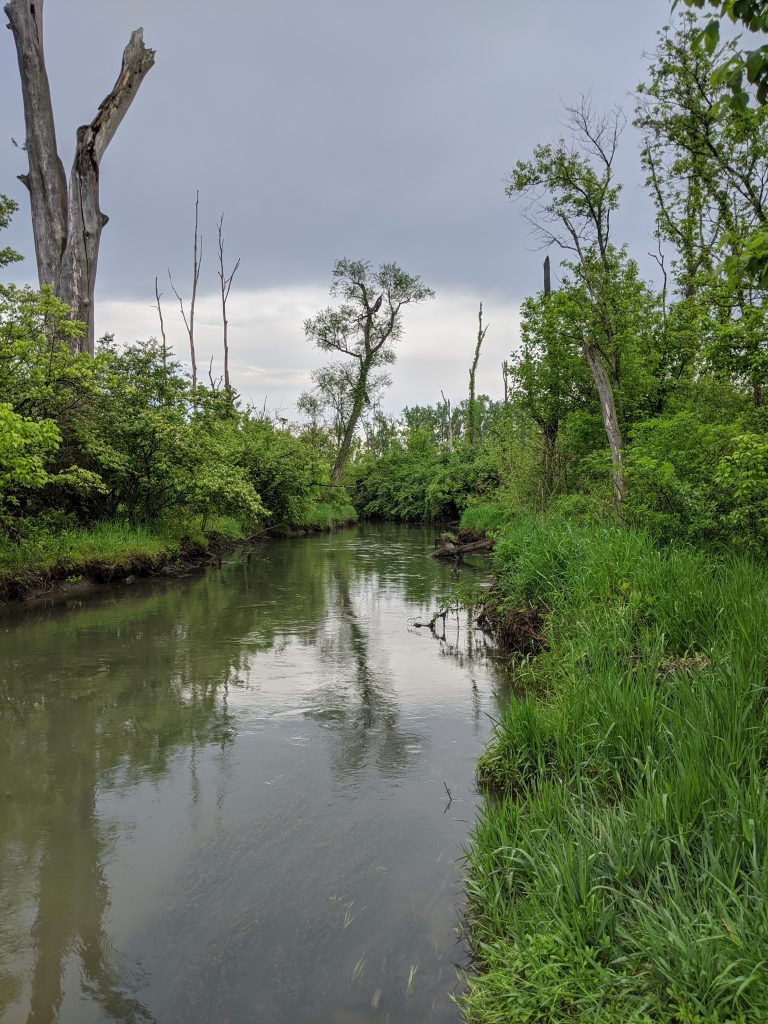 Tree-lined Creek on Cloudy Day