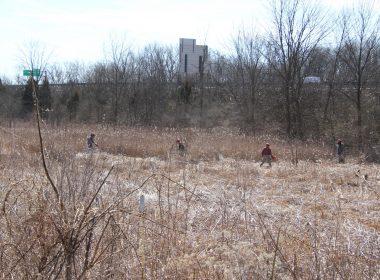 Zimmerman Prairie State Nature Preserve - 2018 IMG_2072