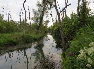 Siebenthaler Fen - Beaver Creek - 8 26 15 SF - Rick Luehrs