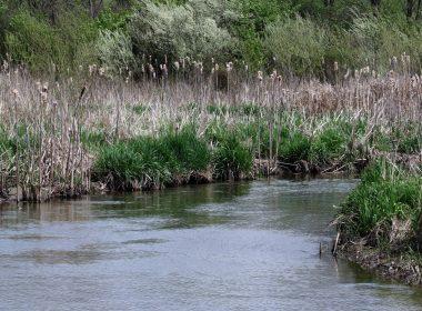 Beavercreek-Wetlands-Reserve-Stream-Mike-Mushala
