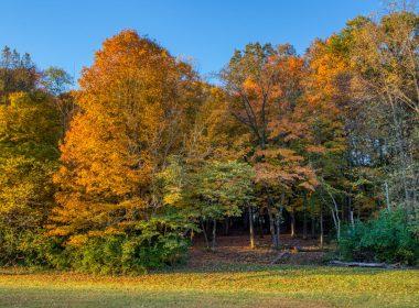 Community_Park_fall_colors