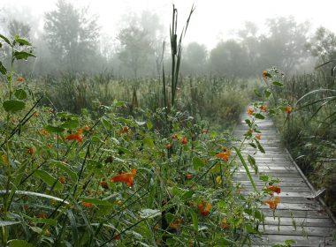 Koogler Wetland/Prairie Reserve - FEATURED_20140903_081742