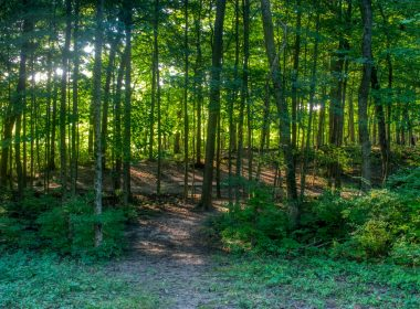 FEATURED_Community_Park_wooded_path