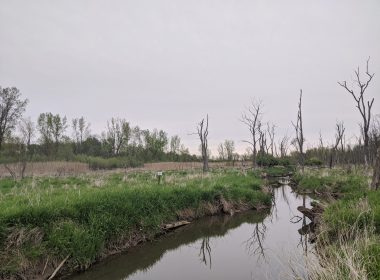 James P. Amon Biodiversity Reserve - IMG_20200504_193028