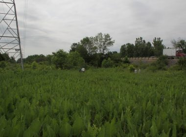 Zimmerman Prairie State Nature Preserve - IMG_4102