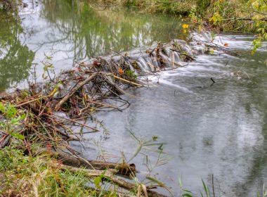 Siebenthaler Fen - Beaver Dam
